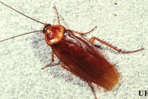 Photo #1: Pest Control, Lawn spraying, Termites - Ed the bug man