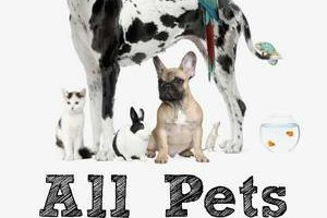 Photo #1: $10/visit Pet Sitting by Rachel Trombley