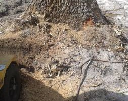 Photo #4: Brad Frederick's - Stump Grinding & surface roots removal