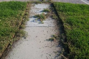 Photo #4: Green-Cutz Lawn Care LLC