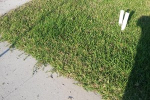 Photo #3: Green-Cutz Lawn Care LLC