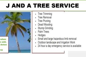 Photo #1: Palm Tree and all Yard Work - Shrubs, Hedges