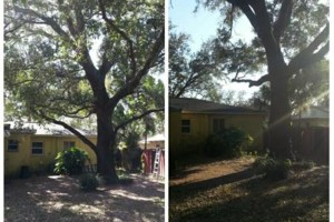 Photo #11: TREE TRIMMING. ASAP-NO HASSLE/FLAT RATE TREE WORK !