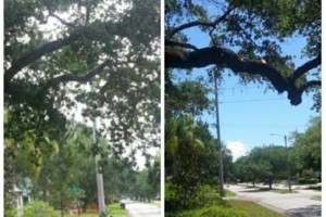 Photo #8: TREE TRIMMING. ASAP-NO HASSLE/FLAT RATE TREE WORK !