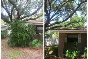 Photo #7: TREE TRIMMING. ASAP-NO HASSLE/FLAT RATE TREE WORK !