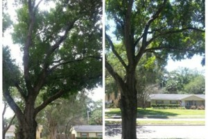 Photo #6: TREE TRIMMING. ASAP-NO HASSLE/FLAT RATE TREE WORK !