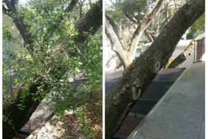 Photo #3: TREE TRIMMING. ASAP-NO HASSLE/FLAT RATE TREE WORK !