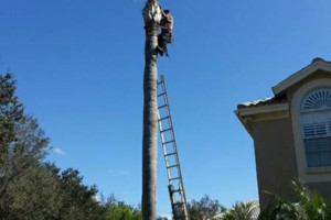 Photo #2: TREE TRIMMING. ASAP-NO HASSLE/FLAT RATE TREE WORK !