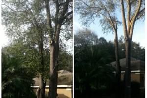 Photo #1: TREE TRIMMING. ASAP-NO HASSLE/FLAT RATE TREE WORK !