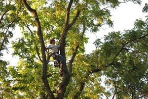 Photo #23: TEZNA LANDSCAPING & TREE TRIMMING SERVICES