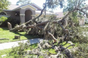 Photo #21: PROFESSIONAL TREE SERVICE & PROPERTY MAINTENANCE
