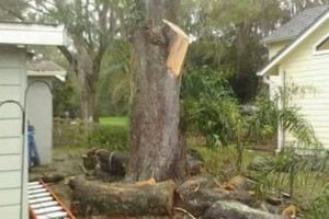 Photo #16: PROFESSIONAL TREE SERVICE & PROPERTY MAINTENANCE