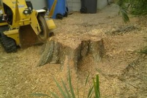 Photo #15: PROFESSIONAL TREE SERVICE & PROPERTY MAINTENANCE