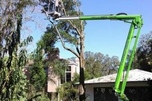 Photo #13: PROFESSIONAL TREE SERVICE & PROPERTY MAINTENANCE