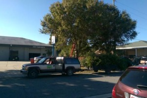 Photo #5: PROFESSIONAL TREE SERVICE & PROPERTY MAINTENANCE