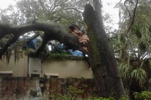 Photo #4: PROFESSIONAL TREE SERVICE & PROPERTY MAINTENANCE