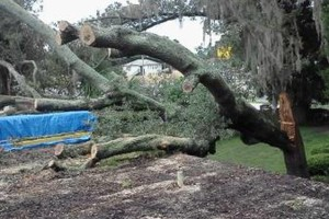 Photo #3: PROFESSIONAL TREE SERVICE & PROPERTY MAINTENANCE
