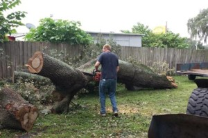 Photo #1: PROFESSIONAL TREE SERVICE & PROPERTY MAINTENANCE