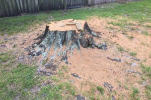 Photo #5: First Response Stump Removal