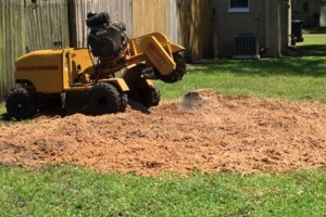 Photo #4: First Response Stump Removal