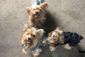 Photo #1: D&B Experienced dog walker - $10 for 1 hour walk