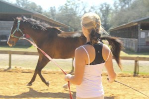 Photo #5: HORSEBACK RIDING LESSON. Horse Sense Florida