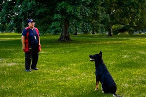 Photo #8: NEXUSHAUS K-9 SERVICES - DOG TRAINING/ DOG BOARDING