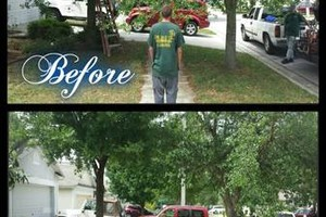 Photo #16: Commercial/Residential Lawn Care, Tree Service, Maintenance...