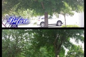Photo #15: Commercial/Residential Lawn Care, Tree Service, Maintenance...