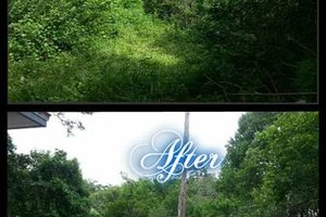 Photo #14: Commercial/Residential Lawn Care, Tree Service, Maintenance...