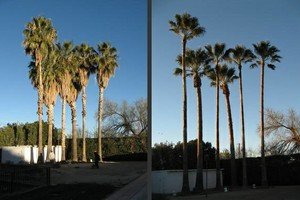 Photo #13: Commercial/Residential Lawn Care, Tree Service, Maintenance...