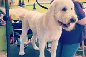Photo #3: Affordable Mobile  Holistic IN-HOME Dog Groomer