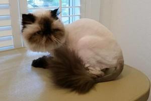 Photo #5: House Call Cat Groomer - Ruff2Ritz Grooming