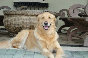 Photo #6: IN HOME DOG TRAINING - Home Sweet Home