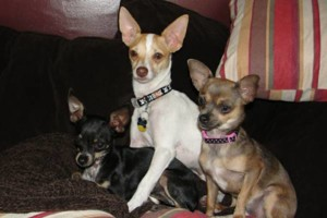 Photo #1: IN HOME DOG TRAINING - Home Sweet Home