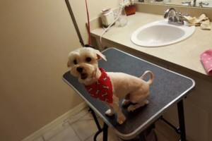 Photo #22: Patient Paws Mobile Dog Grooming