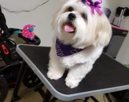 Photo #6: Patient Paws Mobile Dog Grooming
