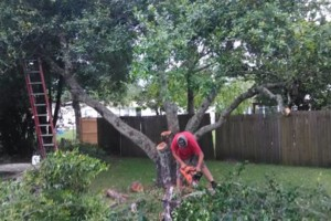 Photo #1: Tree removal, lawn care, property maintenance