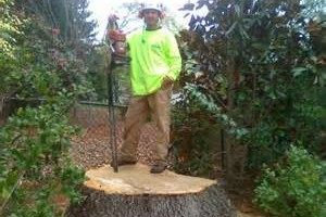 Photo #1: KENNY TREE INC. - Trimming/Tree removal