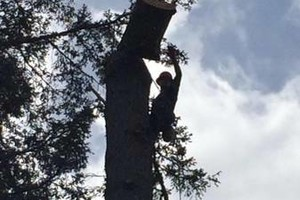 Photo #1: Pacific North West Tree Service, LLC
