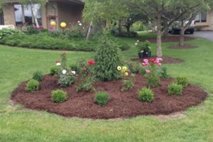 Photo #1: Lawn mowing, edging, yard services, spring/summer landscaping