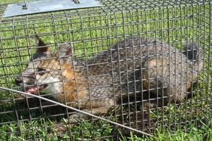 Photo #1: Holbert's critter getters & lawn