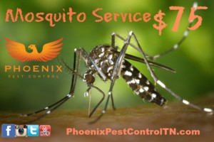 Photo #2: Phoenix Pest Control