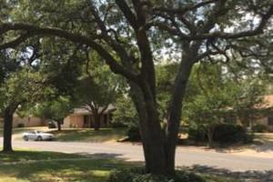 Photo #3: Chuy's Tree Service
