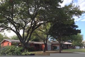 Photo #1: Chuy's Tree Service
