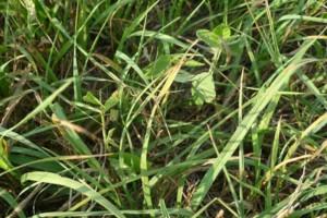 Photo #1: AFFORDABLE! Pasture Shredding, Tilling, Haul Off &More