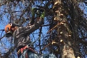 Photo #6: GONZALEZ TREE SERVICE