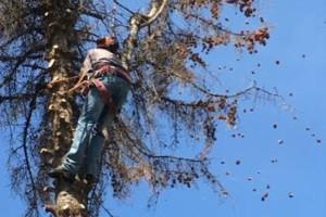 Photo #5: GONZALEZ TREE SERVICE