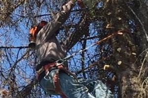 Photo #4: GONZALEZ TREE SERVICE