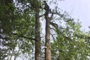 Photo #3: GONZALEZ TREE SERVICE